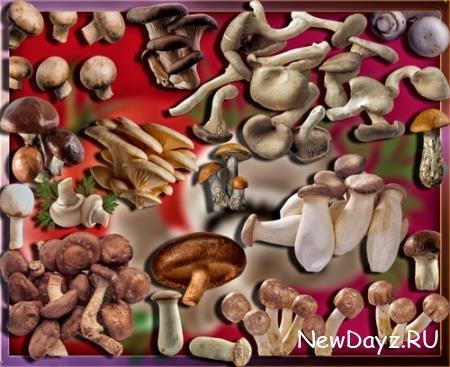 Png без фона - Осенние грибы