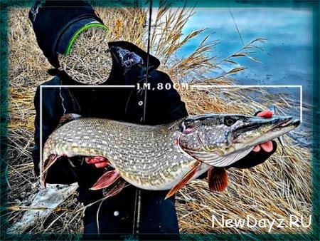 Шаблон для рыбака - Щука почти в 2 метра